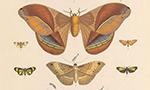 Bibliometría: ¿una nueva amenaza para la taxonomía zoológica?