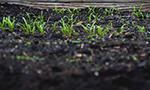 Hacia una ciencia del suelo más abierta