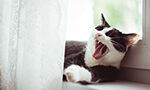 COVID-19 em felinos, seu papel na saúde humana e possíveis implicações para os seus tutores e para a vigilância em saúde [Originalmente publicado na Epidemiol. Serv. Saúde, vol. 29 no. 2]