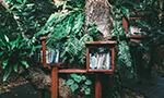 Bibliodiversidade – O que é e por que é essencial para criar conhecimento situado [Publicado originalmente no LSE Impact Blog em dezembro/2019]